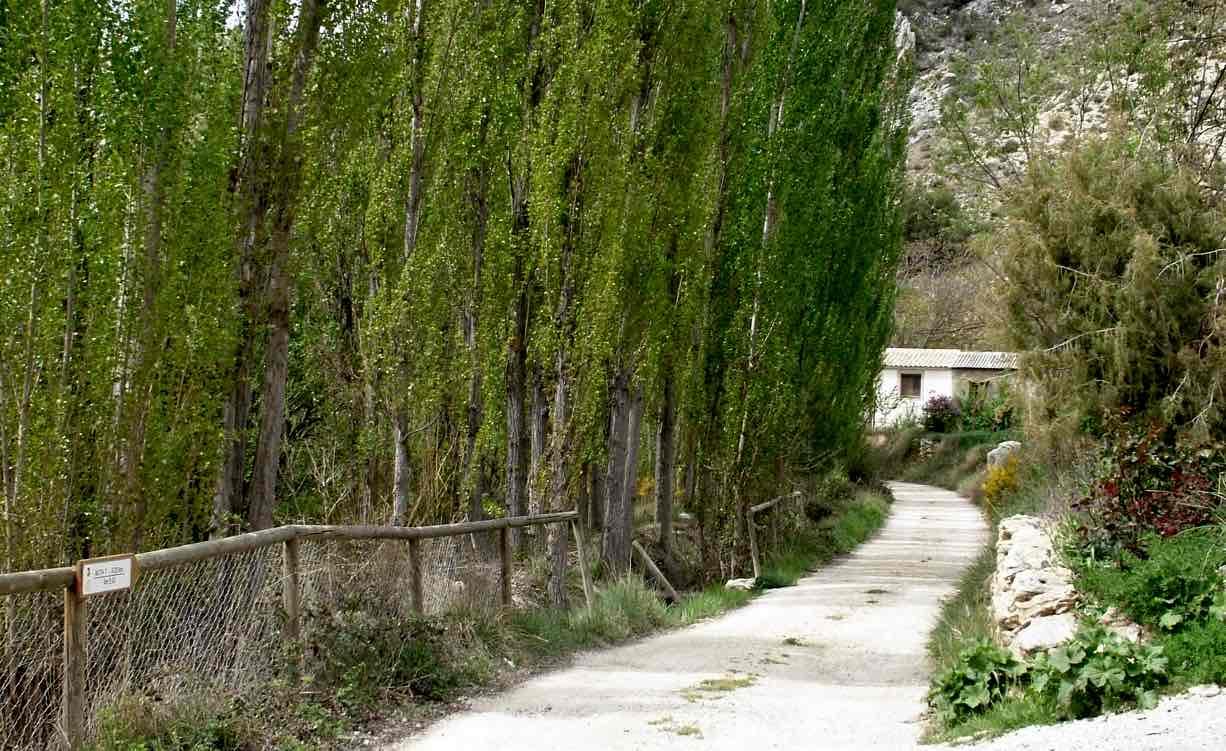 Ruta 7 Nerpio Castillo del Taibilla por el Plantón del Covacho 3