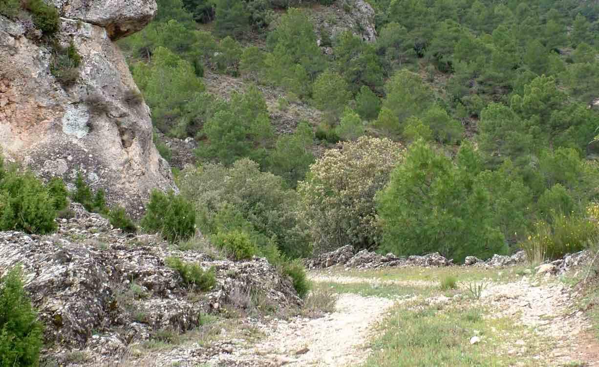 Ruta 16 Por el Cortijo del Tamaral