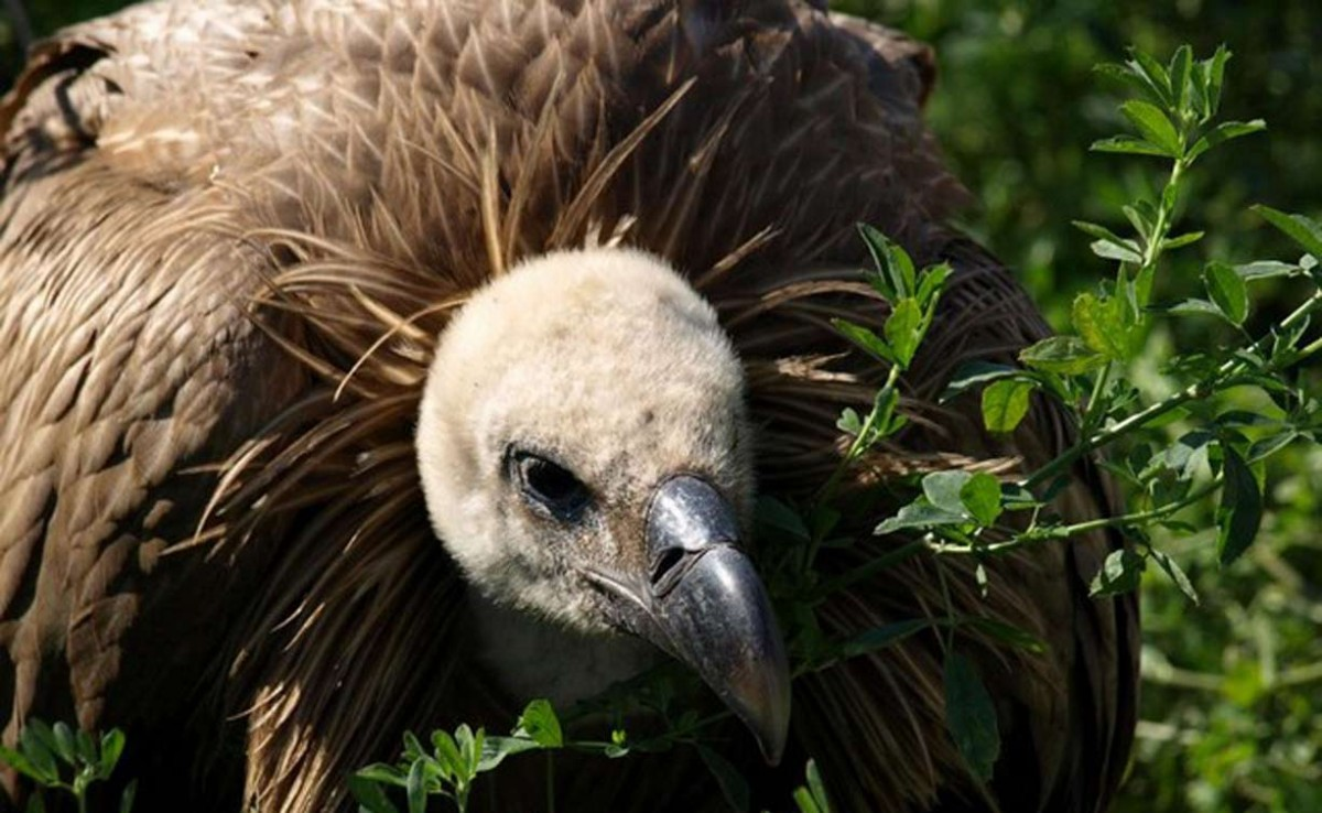 Turismo Ornitológico en Nerpio