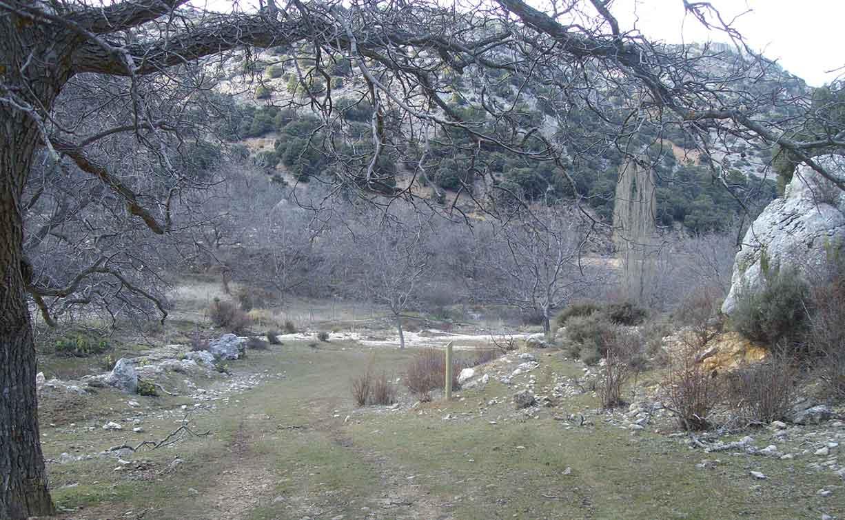 ruta-ornitologica-artuño-5